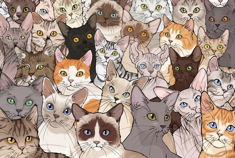 Katzenrassen Sammlung