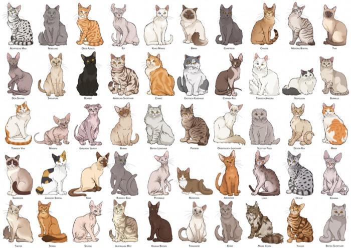 Katzenrassen Tabelle