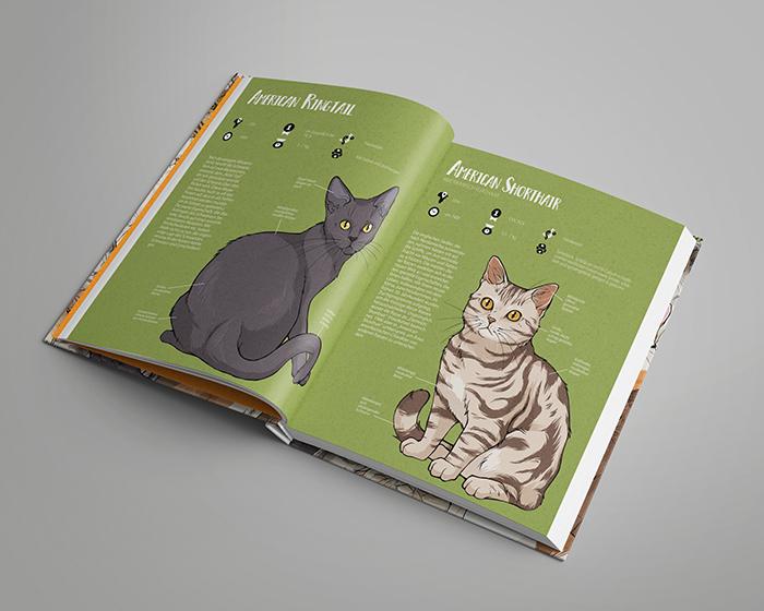 Katzen Sachbuch